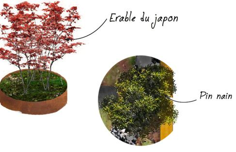 exemple arbres vivaces