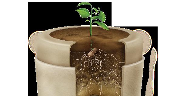 urne biodégradable et arbre